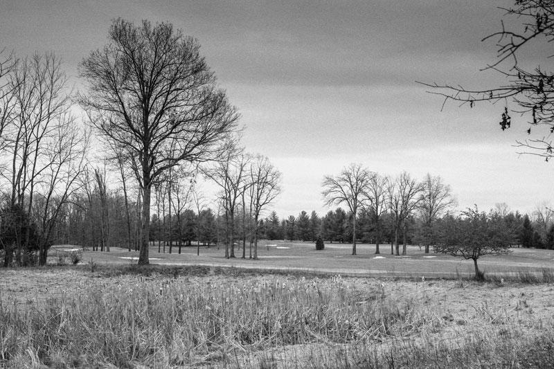 tall grasses and unique golf landscape